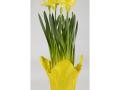 Daffodils 11.00