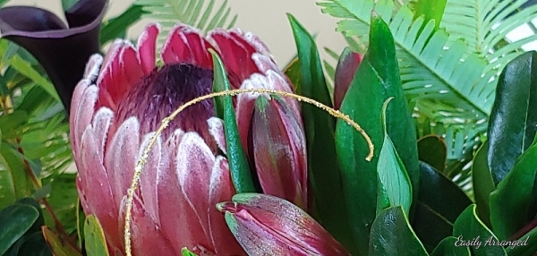 close up protea