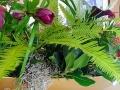 Australian umbrella fern
